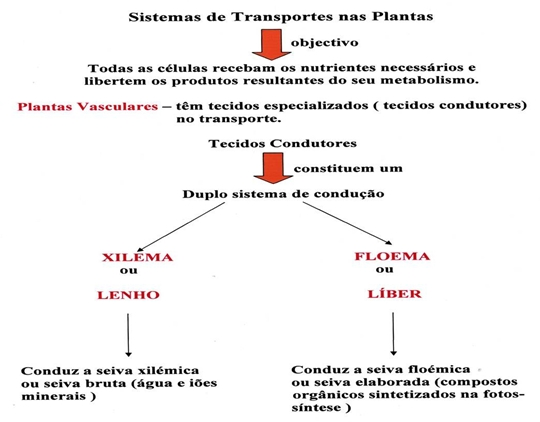 10_transporte_nas_plantas_01_d