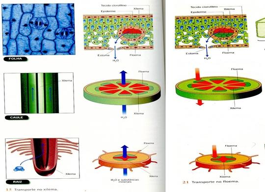 10_transporte_nas_plantas_08_d