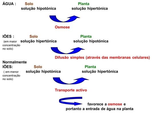 10_transporte_nas_plantas_11_d