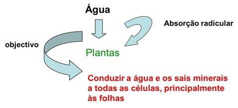 10_transporte_nas_plantas_13_d