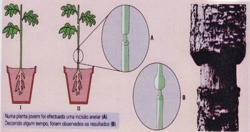 10_transporte_nas_plantas_19_d